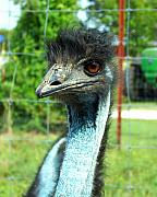 Ostrich Photo Metal Prints - Ostrich Metal Print by Jai Johnson