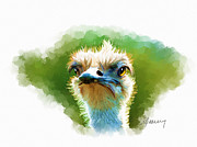 Ostrich Paintings - Ostrich Portrait by Michael Greenaway