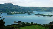 Otago Harbour Print by Therese Alcorn