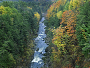 Quechee Prints - Ottauquechee River And Quechee Gorge Print by Tim Fitzharris