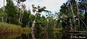 Barbara Bowen - Otter Creek