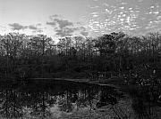 Slough Prints - Otter Pond Print by Juergen Roth
