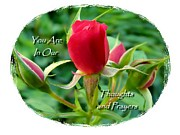 Condolences Posters - Our Thoughtful Rose Sentiments Poster by Cindy Wright