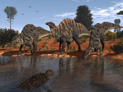Mesozoic Era Posters - Ouranosaurus Drink At A Watering Hole Poster by Walter Myers