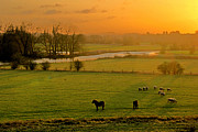 Grazing Horse Posters - Ouse Valley Poster by Images by Roy Dobb