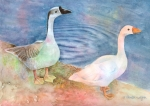 Goose Painting Framed Prints - Out For A Stroll Framed Print by Arline Wagner