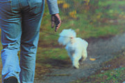 Dog Walking Metal Prints - Out for a Stroll Metal Print by Karol  Livote