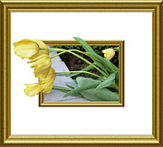 Oof Photos - Out of Frame Yellow Tulips by Kristin Elmquist