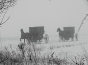 Horse And Buggies Prints - Out of the fog Print by David Arment