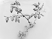 Plants - Out of the Snow by Heiko Koehrer-Wagner