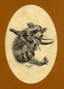 Raccoon Drawings - Out on a Limb by Karen Musick