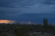 Arizona Lightning Originals - Out Wickenberg Way by Cathy Franklin