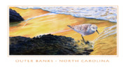 Shoreline Mixed Media Prints - Outer Banks Sanderling Print by Bob Nolin