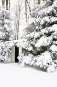 Antique Outhouse Photos - Outhouse in Pines by Thomas R Fletcher