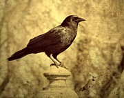 Gothic Digital Art Posters - Outlook Poster by Gothicolors With Crows