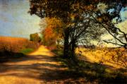 Fall Road Posters - Over My Shoulder Poster by Lois Bryan