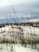 Fencing Originals - Over the Dunes by Karen Devonne Douglas