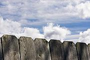 Blue Sky Art - Over the Fence by Rebecca Cozart