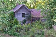 Morgan County Prints - Overgrown Abandoned 1800 Farm House Print by Douglas Barnett