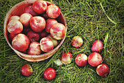 Basket Posters - Overhead shot of a basket of freshly picked apples Poster by Sandra Cunningham
