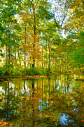 Creek Greeting Cards Prints - Owens Creek in Autumn I Print by Steven Ainsworth