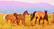 Owens Valley Art - Owens Valley Dawn with Mare and Colts by Gus McCrea