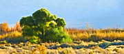 Hawkins Mixed Media - Owens Valley Tree and Brush by Frank Lee Hawkins  Eastern Sierra Gallery