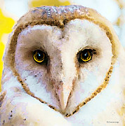 Barn Owl Prints - Owl Art - Soft Love Print by Sharon Cummings