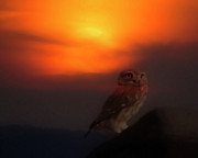 Birds On Barn Prints - Owl at sunset Print by Cliff  Norton