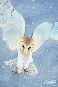 Barn Owl Prints - Owl Detail Print by Tim Dangaran