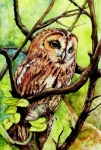 Bird Mixed Media Metal Prints - Owl from Butterfingers and Secrets Metal Print by Morgan Fitzsimons