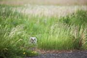 The Pathway Photos - Owl In The Grass Thunder Bay, Ontario by Susan Dykstra