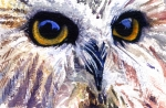 Eye Painting Prints - Owl Print by John D Benson
