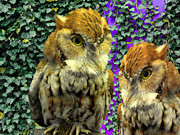 Owl Look Print by Lynda Lehmann