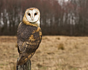 Focus On Foreground Art - Owl Looking At Camera by Jody Trappe Photography