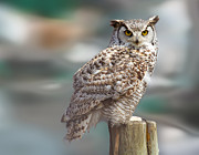 Owl Love Print by Naman Imagery