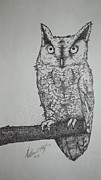 Matthew Wright - Owl