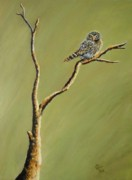 Cami Lee - Owl On A Branch