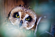 Outdoors Prints - Owl See Print by Joseph Rossi