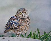 Burrowing Painting Framed Prints - Owl Framed Print by Sharon Farber