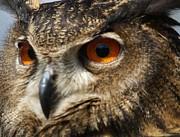 Owl Up Close Print by Paulette  Thomas