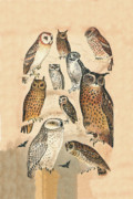Birds Of Prey Mixed Media Prints - Owls Print by Eric Kempson
