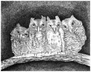 Stippling Framed Prints - Owls Framed Print by Lawrence Tripoli