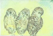 Owls Drawings - Owls by Ramsey A Single