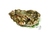 Watercolors Painting Originals - Oyster by Paul Gaj