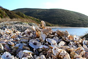 Point Reyes National Seashore Acrylic Prints - Oyster Shell Hill at Drakes Bay Oyster Company in Point Reyes California . 7D9849 Acrylic Print by Wingsdomain Art and Photography