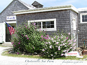 New England Village Digital Art Posters - Oysterville Sea Farm Cooked Crab Poster by Glenna McRae