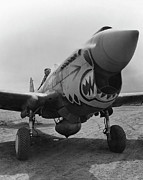 Fighter Photo Prints - P-40 Warhawk Print by War Is Hell Store