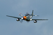 Airshows Photos - P-51 Mustang by Bill Lindsay