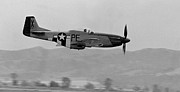 North American P51 Mustang Photo Posters - P-51d Poster by BuffaloWorks Photography
